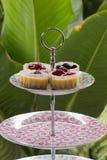 Pastel de queso del arándano y de la fresa Imagen de archivo libre de regalías