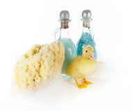 Pastel duckling royalty free stock photography