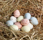 Pastel eggs in nest Royalty Free Stock Photo