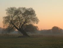 Pastel Evening Colours at a Meadow Royalty Free Stock Photo