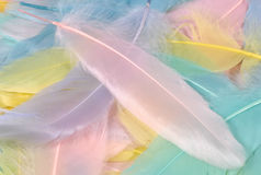 Pastel Feathers. Photo of Pastel Colored Feathers Royalty Free Stock Images