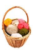 Pastel ferret in basket Stock Images