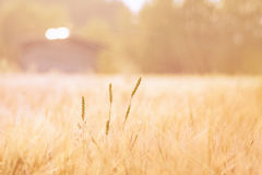 Pastel Field Stock Photography