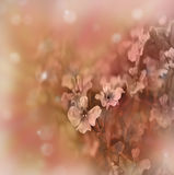 Pastel floral border Stock Photography