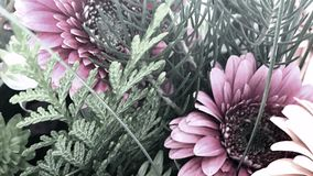Pastel Floral Display, Youtube Channel Art Banner. 2560 x 1440 , Close up Floral Subject royalty free stock image