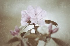 Pastel floral grunge Stock Photography