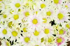 Pastel flowers bouquet and bokeh background Royalty Free Stock Images