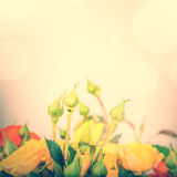 Pastel flowers on tender background, color filters Stock Images