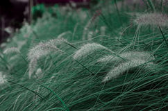 Pastel Grass. Grass with pastel color style Stock Photo