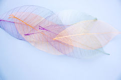Pastel leaves Royalty Free Stock Photography