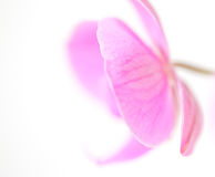 Pastel petals Royalty Free Stock Photos