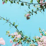 Pastel pink blooming flowers and blue sky in a dream garden, floral background. Blooming beauty, wedding invitation and nature concept - Pastel pink blooming stock photography