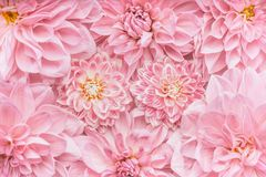 Pastel pink flowers background, top view, Layout or greeting card for Mothers day, wedding or happy event stock photos