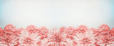 Pastel pink flowers banner or border on pale blue background, top view. Floral layout. Mock up or template Stock Image