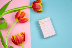 Pastel pink gift box and red tulips on a pink and blue background, springtime festive flat lay. Top view pastel pink gift box and red tulips on a pink and blue royalty free stock images