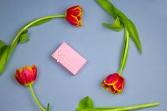Pastel pink gift box and red tulips frame on a blue background. Flat lay pastel pink gift box and red tulips frame on a blue background royalty free stock image