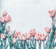 Pastel pink tulips border, springtime flowers background, top view. Layout or greeting card stock images