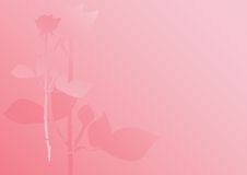 Pastel rose background. Pastel pink rose background, Valentine's day Stock Image