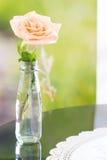Pastel rose Stock Photos