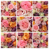 Pastel rose collage Royalty Free Stock Photography
