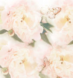 Pastel roses with butterfly Stock Photos