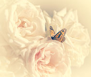 Pastel roses with butterfly. To holiday with cream filter Stock Image