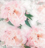 Pastel roses on canvas texture Royalty Free Stock Photography