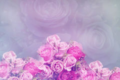 Pastel Roses Royalty Free Stock Photo