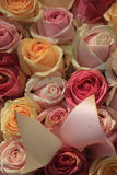 Pastel roses Royalty Free Stock Images
