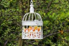 Pastel roses in white vintage birdcage Stock Photo
