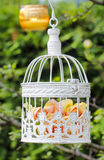 Pastel roses in white vintage birdcage. Hanging on branch. Garden decor, summer party Stock Photo