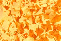 Falling leaf pattern in golden brown. Royalty Free Stock Photos