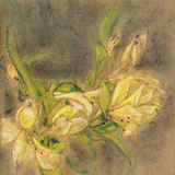Pastel shining lily drawing. On craft paper Royalty Free Stock Photos