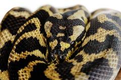 Pastel snake Stock Photos