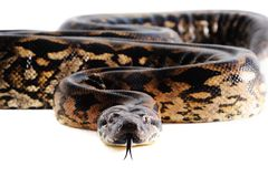 Pastel snake Royalty Free Stock Photo