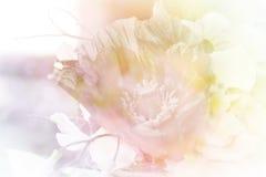 Pastel soft flower Stock Images