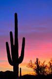 Pastel Sunset. Saguaro silhouette in pastel sunset royalty free stock photography