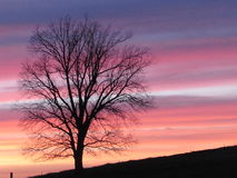 Pastel Sunset with Tree and Country Landscape Stock Photography
