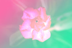 Pastel tone blur backgrounds nature flower Stock Photo