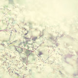 Pastel toned flowers Stock Images