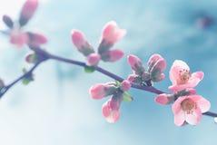 Pastel tones Spring Stock Photos