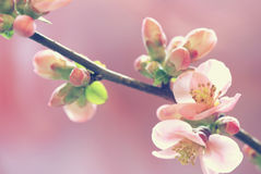 Pastel tones Spring Stock Photos