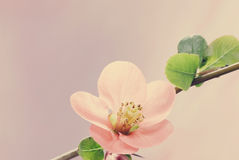 Pastel tones Spring Royalty Free Stock Photo