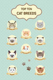 Pastel top ten cat breeds Royalty Free Stock Images