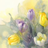 Pastel tulips watercolor background Royalty Free Stock Photo