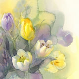 Pastel tulips watercolor background Stock Photography