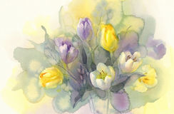 Pastel tulips watercolor background Royalty Free Stock Images