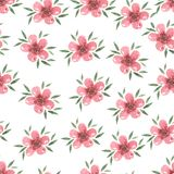 Pastel  watercolor hand drawn pink flower seamless Stock Image