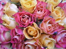 Pastel wedding bouquet. Photograph of a wedding bouquet containing very beautiful (and not very common!) pastel colored roses Stock Photo