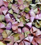 Pastel Wood Shavings. Stock Photo